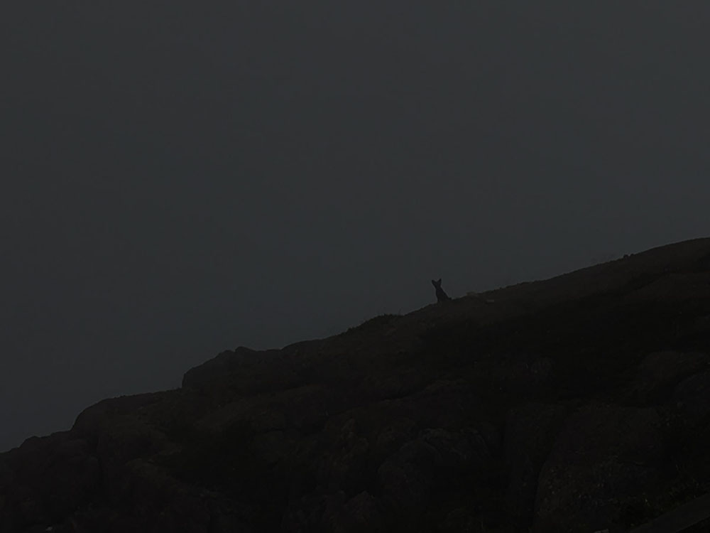 The silhouette of a fox peering down from a ridge.