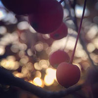 Berries with a bokeh background.